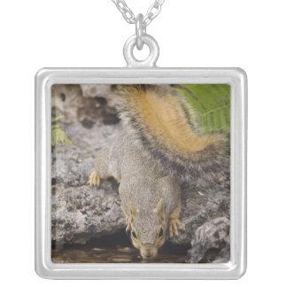 Eastern Fox Squirrel, Sciurus niger, adult 2 Square Pendant Necklace