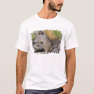 Eastern Fox Squirrel, Sciurus niger, adult 2 T-Shirt