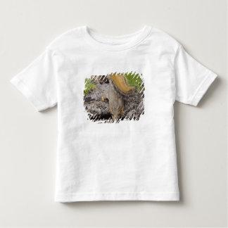 Eastern Fox Squirrel, Sciurus niger, adult 2 Toddler T-shirt