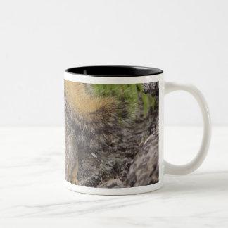 Eastern Fox Squirrel, Sciurus niger, adult 2 Two-Tone Coffee Mug
