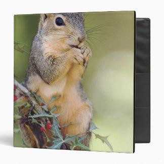 Eastern Fox Squirrel, Sciurus niger, adult Binder