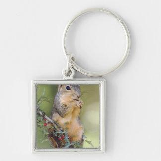 Eastern Fox Squirrel, Sciurus niger, adult Keychain