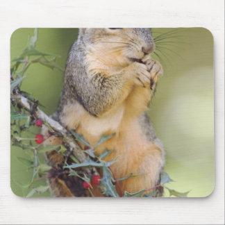Eastern Fox Squirrel, Sciurus niger, adult Mouse Pad