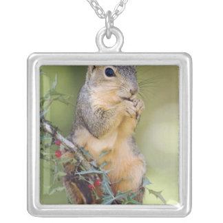 Eastern Fox Squirrel, Sciurus niger, adult Square Pendant Necklace