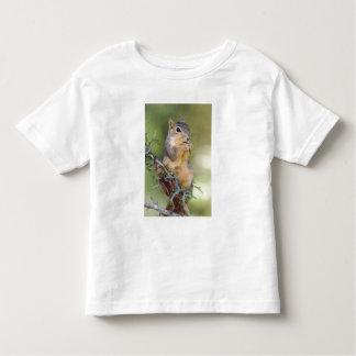 Eastern Fox Squirrel, Sciurus niger, adult Toddler T-shirt