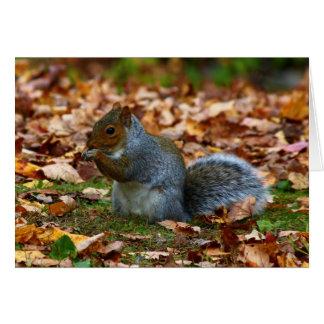 Eastern Gray Squirrel Card