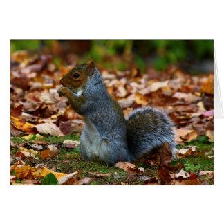 Eastern Gray Squirrel II Card