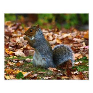 Eastern Gray Squirrel II Photo Print