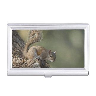 Eastern Gray Squirrel, or grey squirrel Business Card Holder