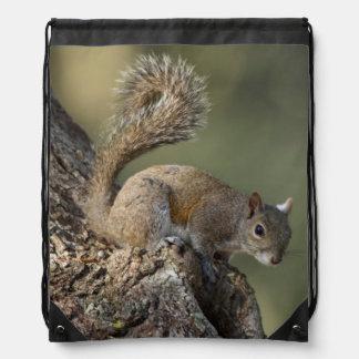 Eastern Gray Squirrel, or grey squirrel Drawstring Bag