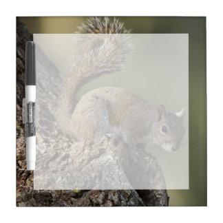 Eastern Gray Squirrel, or grey squirrel Dry-Erase Board