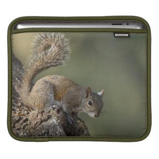 Eastern Gray Squirrel, or grey squirrel iPad Sleeve