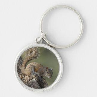 Eastern Gray Squirrel, or grey squirrel Keychain