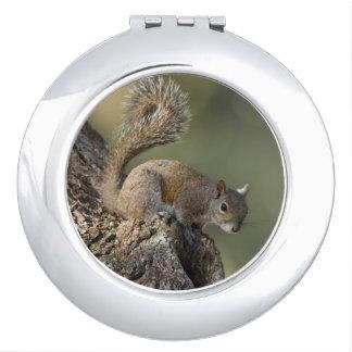 Eastern Gray Squirrel, or grey squirrel Mirror For Makeup