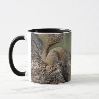Eastern Gray Squirrel, or grey squirrel Mug