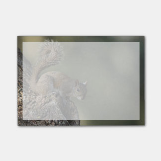 Eastern Gray Squirrel, or grey squirrel Post-it® Notes