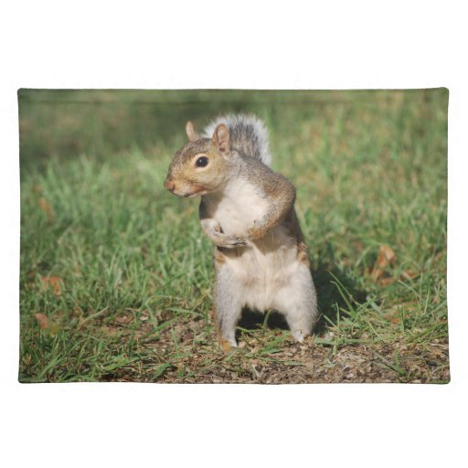 Eastern Gray Squirrel placemat