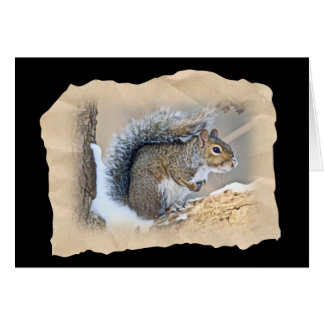 Eastern Gray Squirrel - Sciurus carolinensis Card