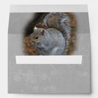 Eastern Gray Squirrel - Sciurus carolinensis Envelope