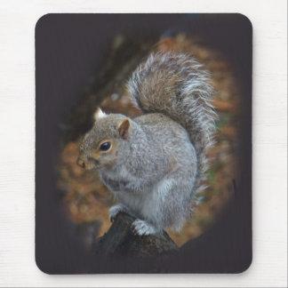Eastern Gray Squirrel - Sciurus carolinensis Mouse Pad