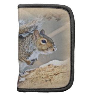 Eastern Gray Squirrel - Sciurus carolinensis Planner