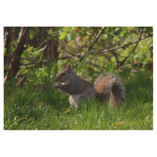 Eastern Gray Squirrel Spring 2016 Wood Poster
