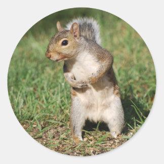 Eastern Gray Squirrel sticker
