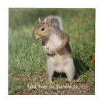 Eastern Gray Squirrel tile
