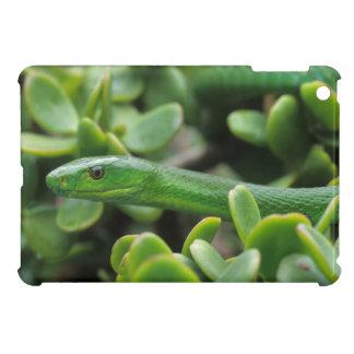 Eastern Green Mamba (Dendroaspis Angusticeps) iPad Mini Cases