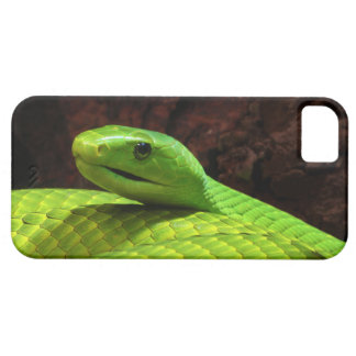 Eastern Green Mamba Dendroaspis Angusticeps iPhone 5 Cases