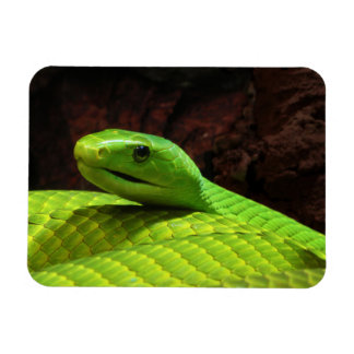 Eastern Green Mamba Dendroaspis Angusticeps Magnet