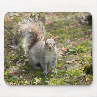 Eastern Grey Squirrel Mouse Pad