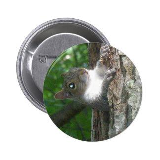 Eastern Grey Squirrel (Sciurus carolinensis) Items 2 Inch Round Button