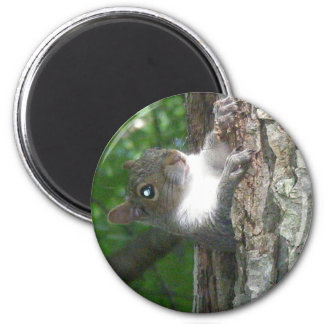 Eastern Grey Squirrel (Sciurus carolinensis) Items Magnet