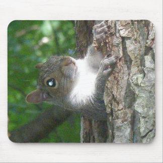 Eastern Grey Squirrel (Sciurus carolinensis) Items Mouse Pad