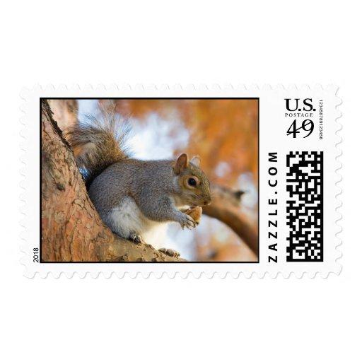 Eastern_Grey_Squirrel Sello