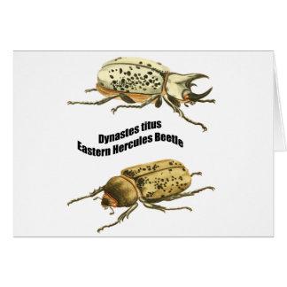 Eastern Hercules Beetle Card