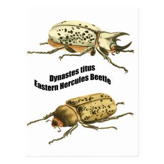 Eastern Hercules Beetle Postcard