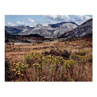 Eastern highlands, Zimbabwe  flowers Postcard