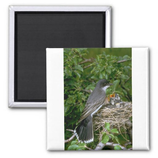 Eastern Kingbird with young Fridge Magnet