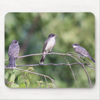 Eastern Kingbirds Mouse Pad