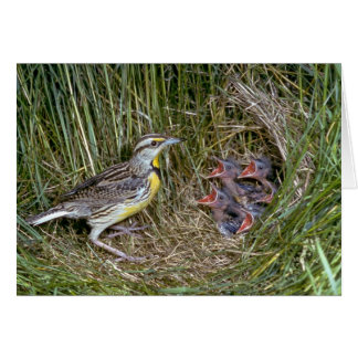 Eastern Meadowlark with young Card