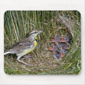 Eastern Meadowlark with young Mouse Pads
