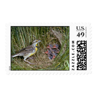 Eastern Meadowlark with young Stamp