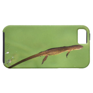 Eastern Newt iPhone 5 Cases