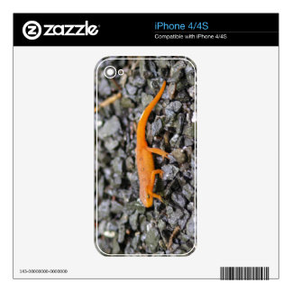 Eastern Newt Decals For The iPhone 4