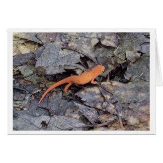 Eastern Newt Greeting Card