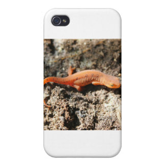 Eastern Newt iPhone 4/4S Case