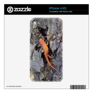 Eastern Newt iPhone 4S Decal