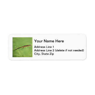 Eastern Newt Label
